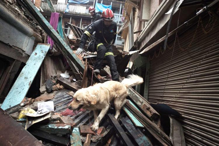 Dog saving lives in Nepal