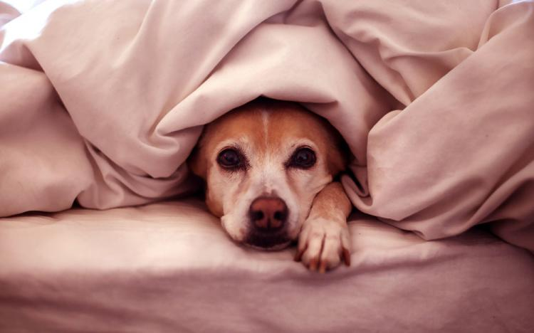 Caring tips for your Pet this Winter