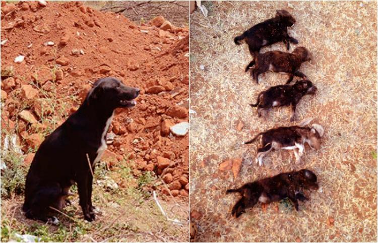 Bengaluru Woman Kills 8 Puppies In Front Of Their Mother Just To Teach The Dog A Brutal Lesson