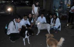 Chennai Uses Magic Collars To Save Stray