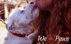 Is it OK to Kiss Your Dog? Here are 5 Reasons Why
