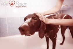 How to Bathe Your Dog & Make Them Love It
