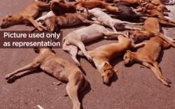 20 Dogs Poisoned To Death By A Man In Mumbai