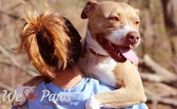 Sweet Shelter Dog Proves That Paws Love Hugs